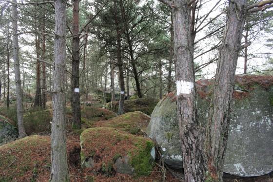 Bornage par ligne d'arbres blanchis