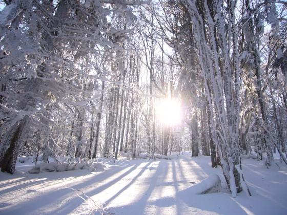 http://www.visorando.com/images/inter/m-foret-en-hiver-visorando-8366.jpg