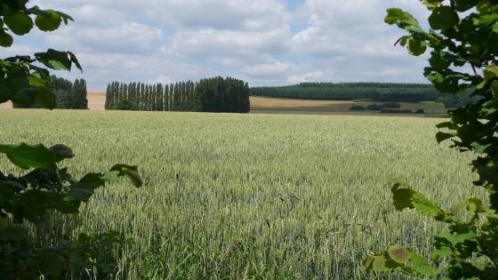 Amenucourt