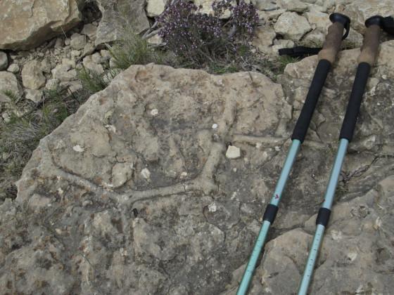 Terriers fossiles de vers de vase du Crétacé
