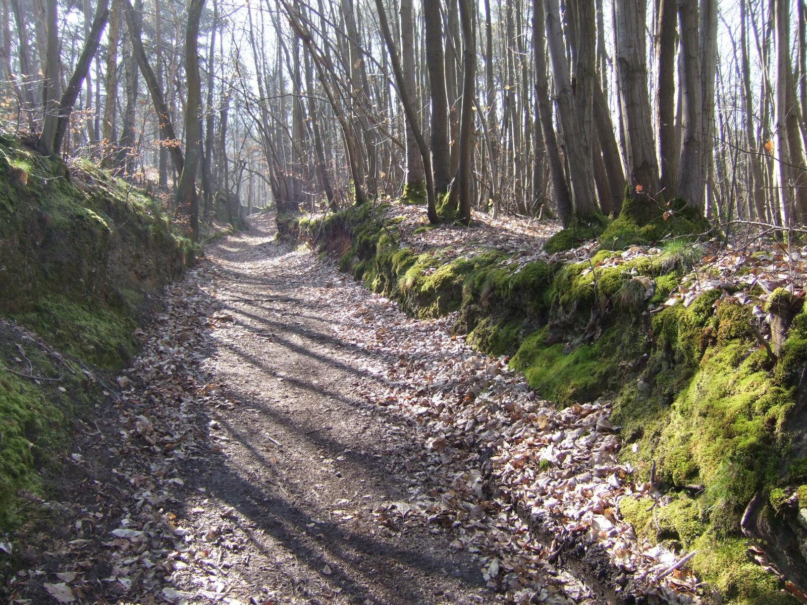 Photo bazoches sur guyonne sentier dans la f ret for Dans la foret