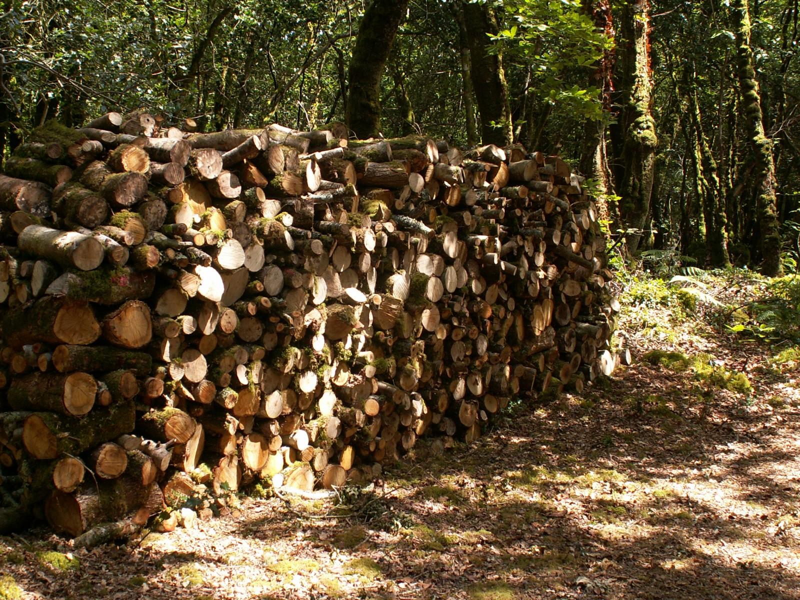 Photo bois de chauffage - Acacia bois de chauffage ...