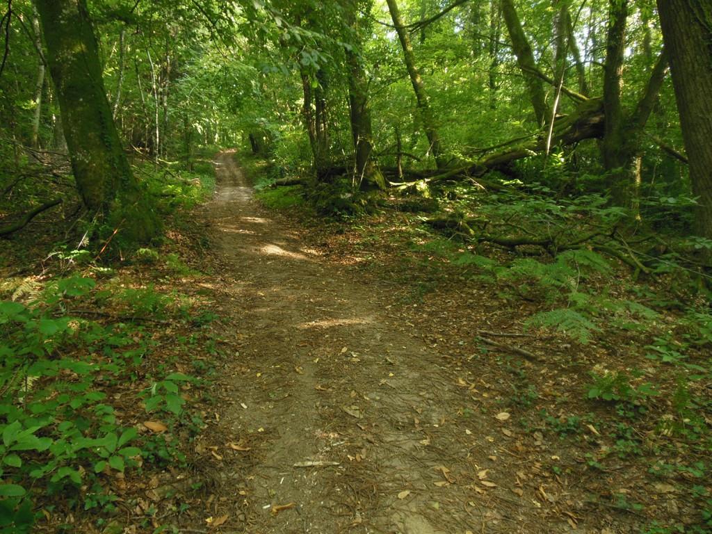 Photo chemin en sous bois du peu barbasson - Sous bassement en bois ...