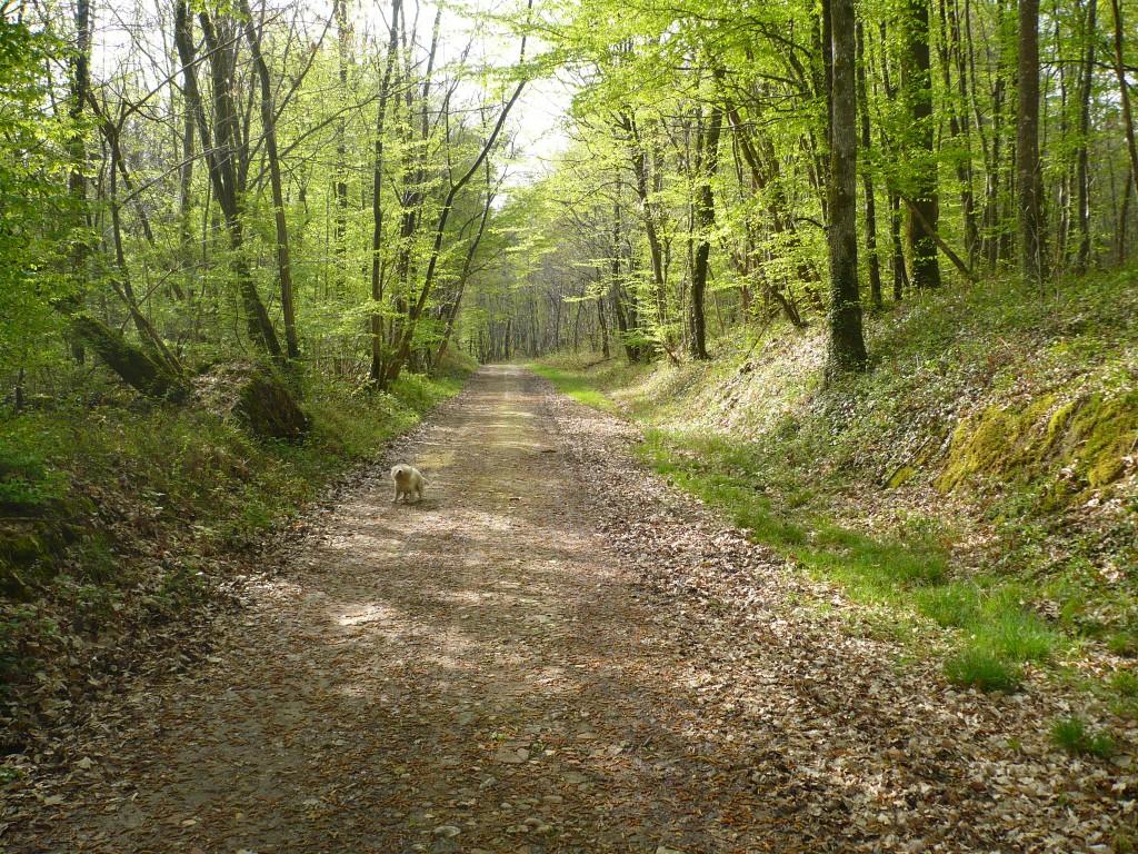 Photo Chemin En Sous Bois Vraiment Tr S Agr Able