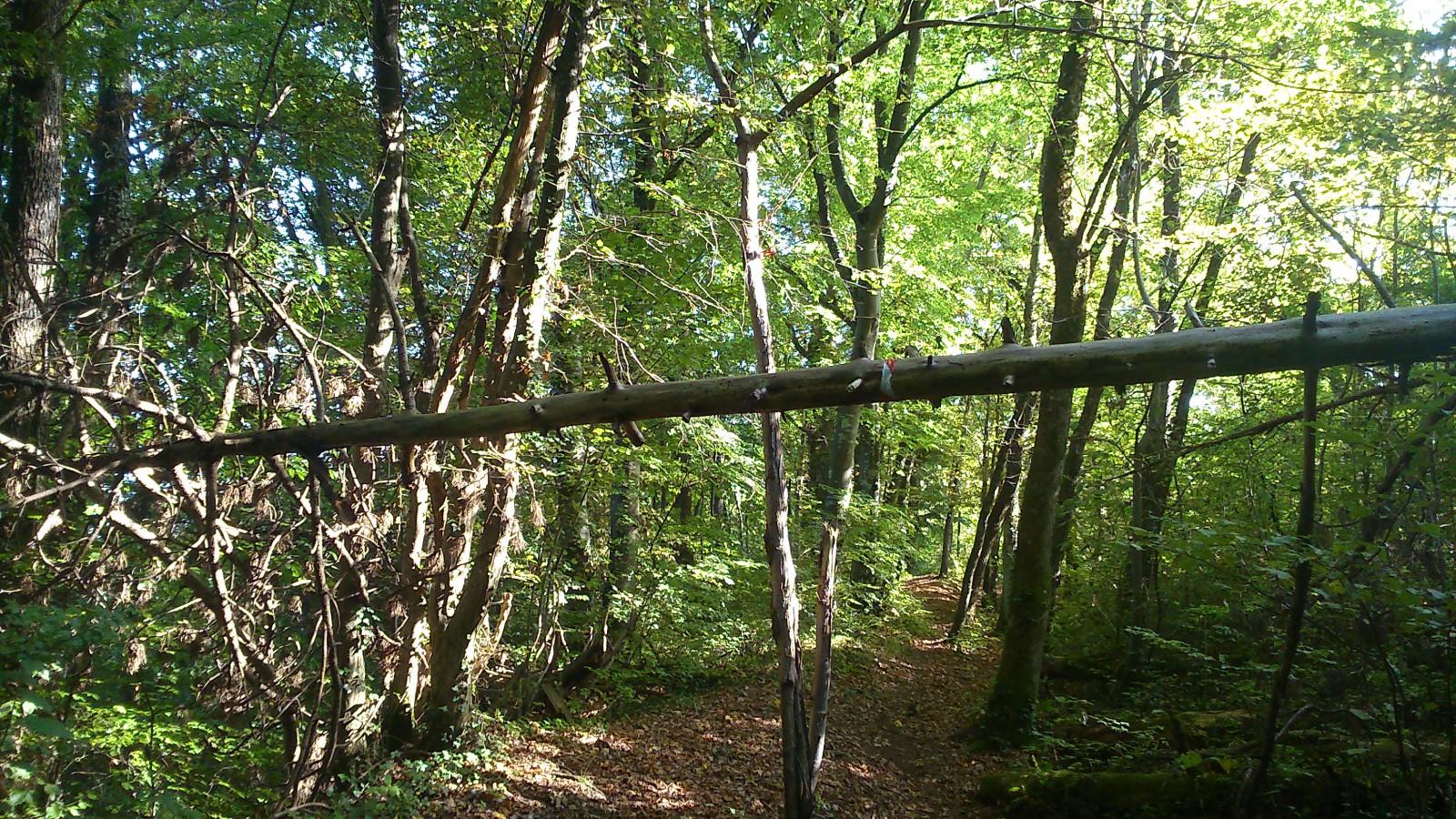 Photo dans les bois for Betes dans le bois
