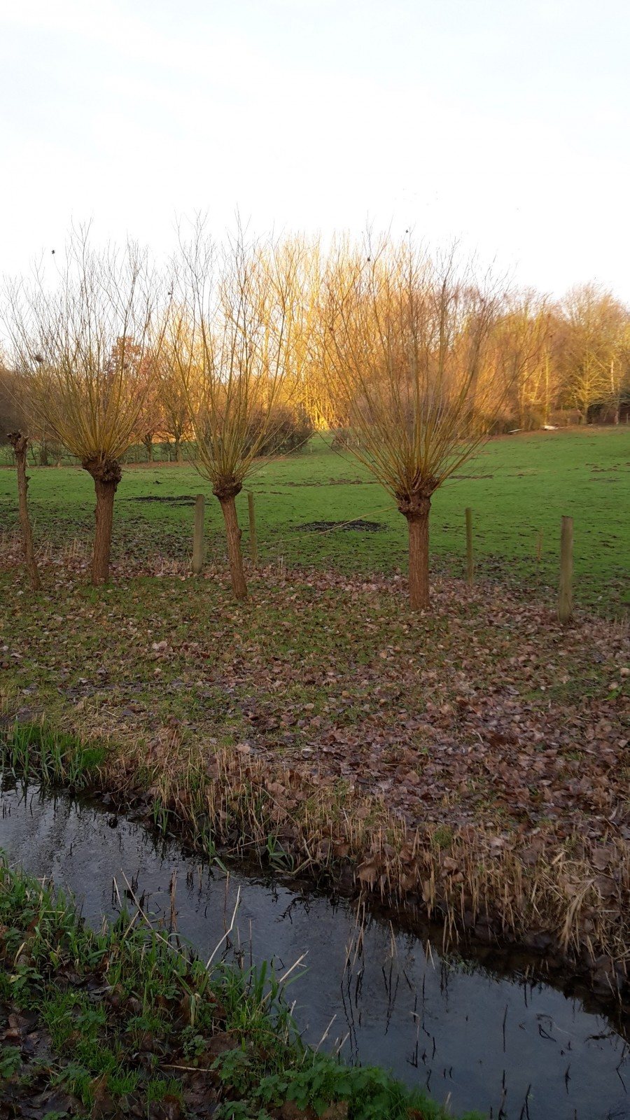 Photo des saules t tards au bord du molenbeek le long de la voie ferr e - Maison au bord de la voie ferree ...