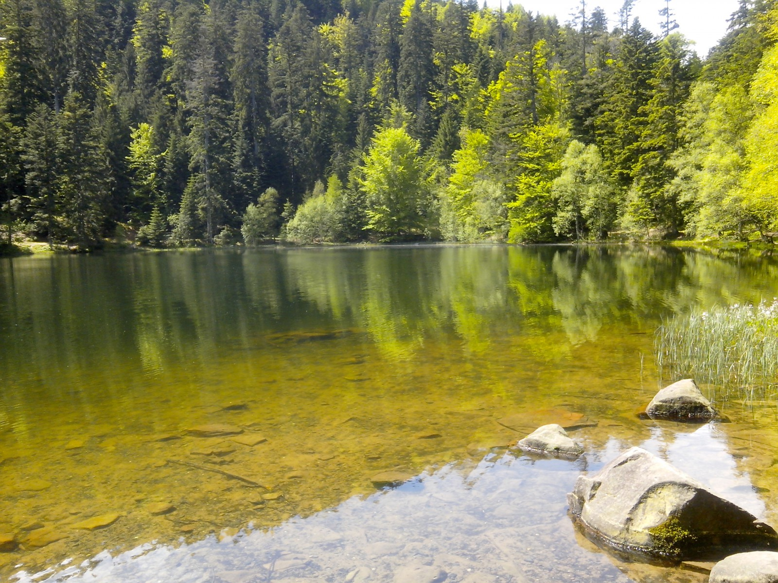 Photo le lac de la maix au printemps for Semer le gazon au printemps