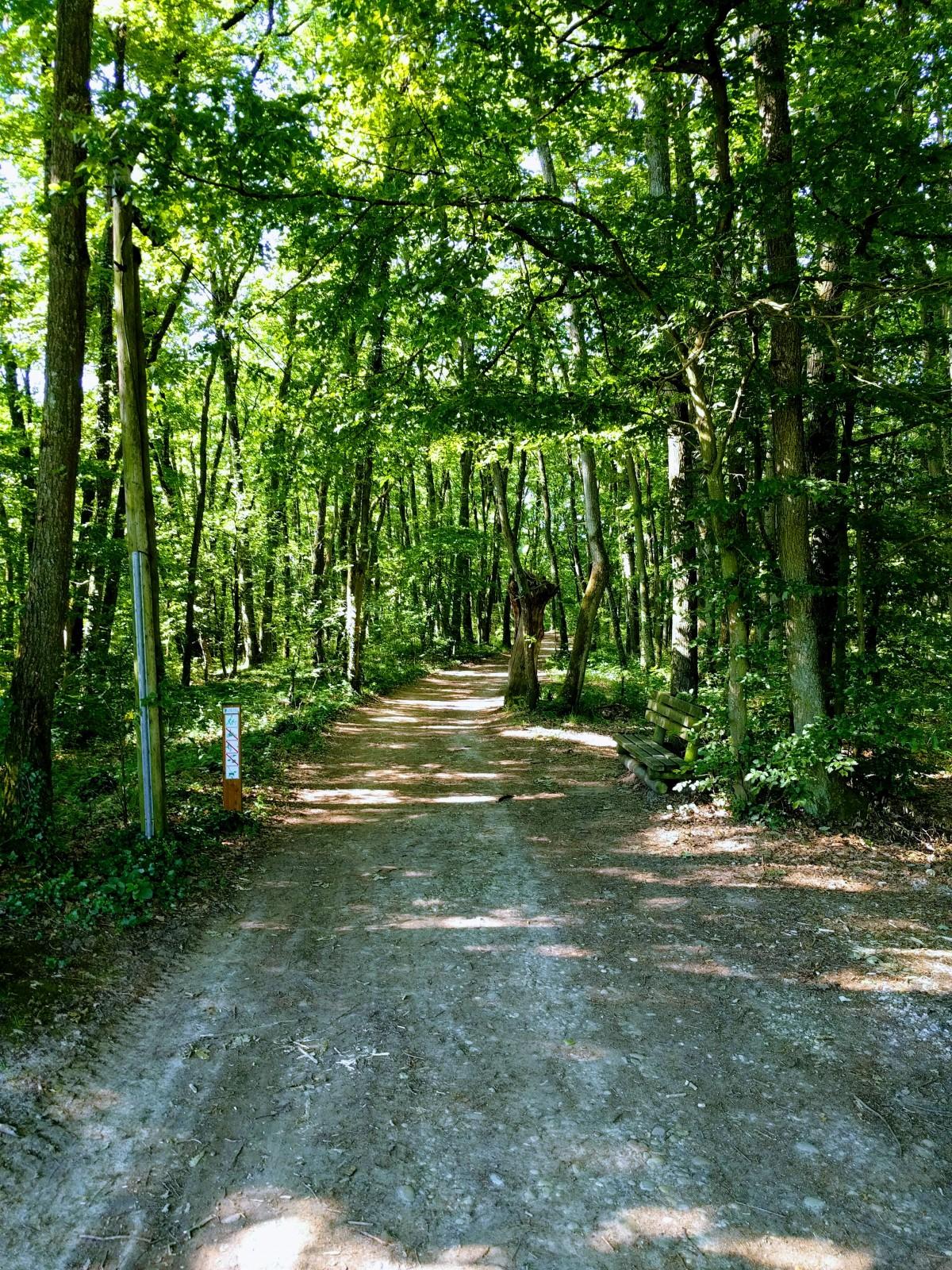 Serre Du Bois Du Sart - Photo Le sentier du bois de Serre