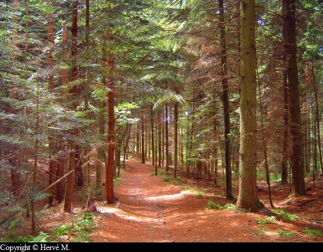 Photo Sentier en sous bois # La Soissonnaise Des Bois
