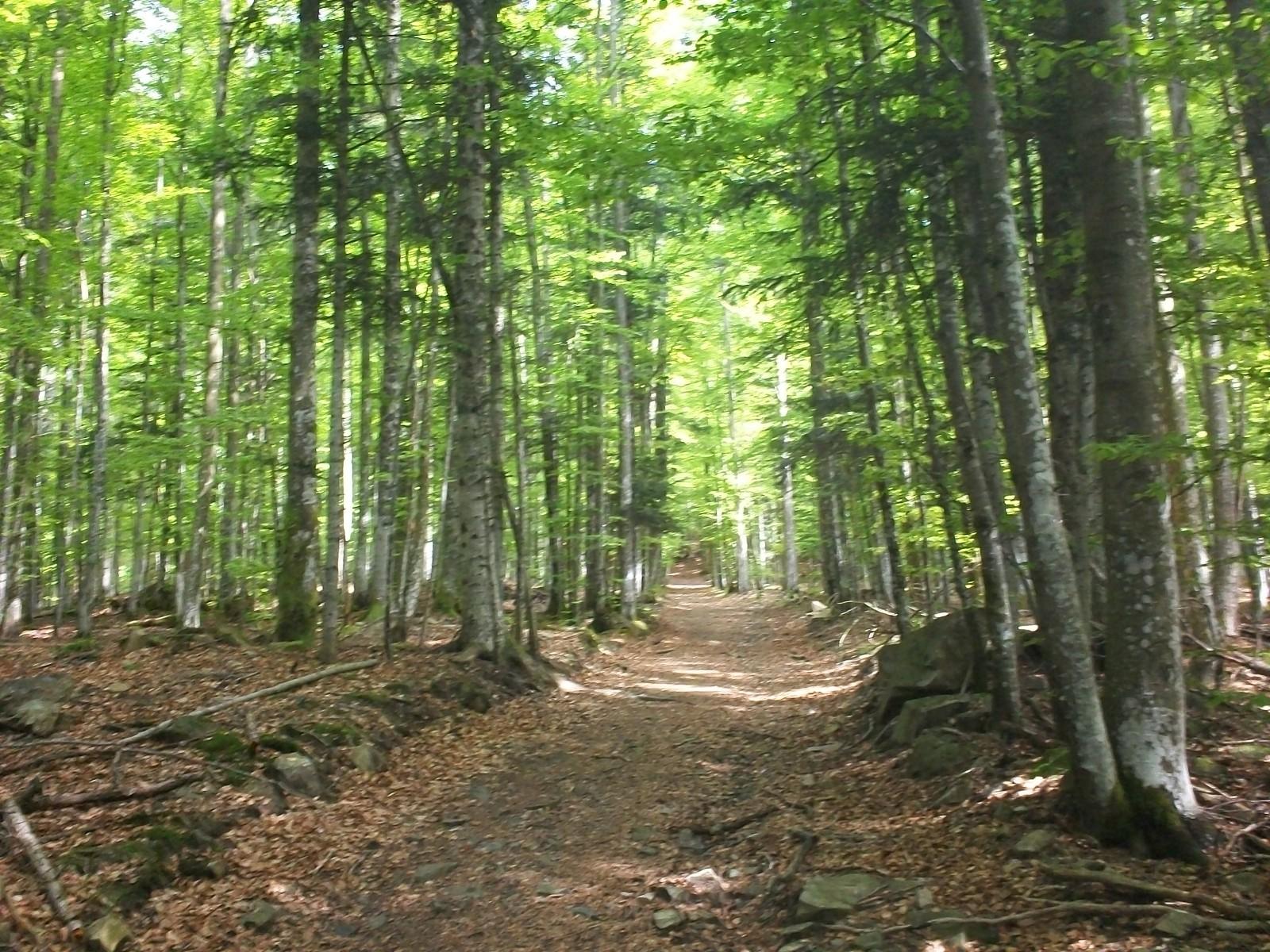 Photo sous bois dans la mont e vers le col oberlauchen for Vers dans le bois