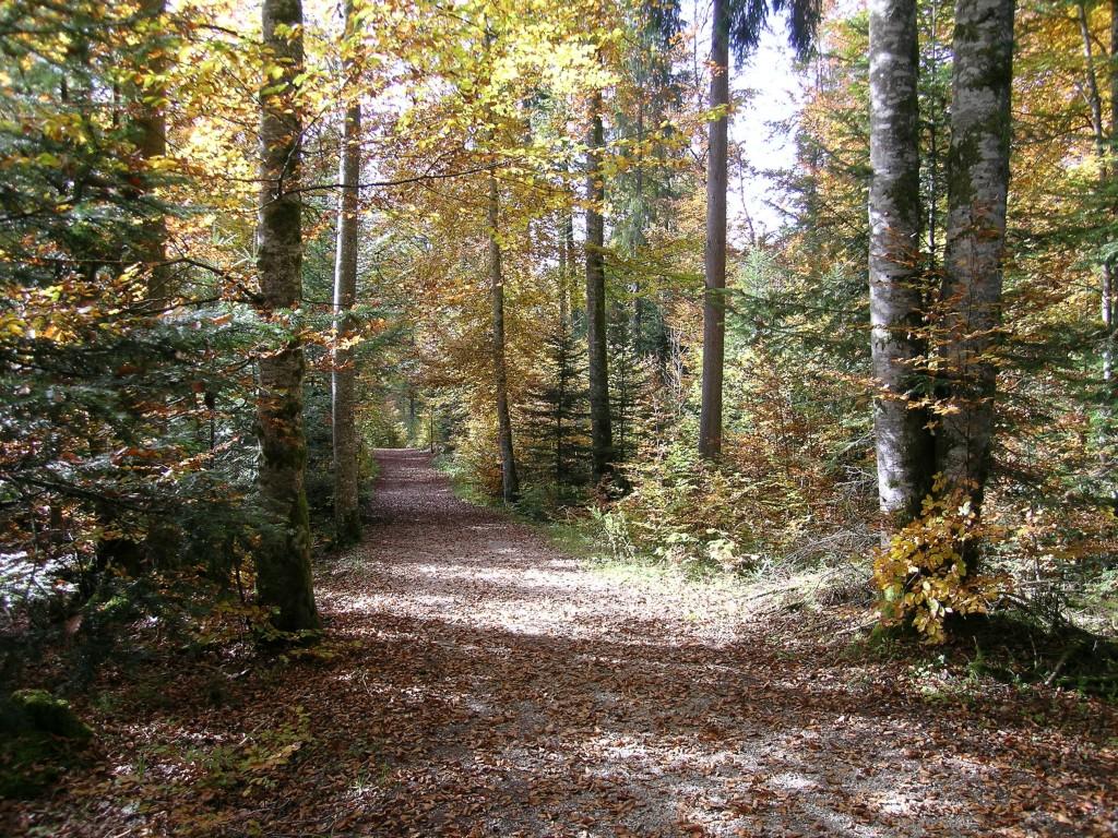 Photo sous bois en automne - Sous bassement en bois ...