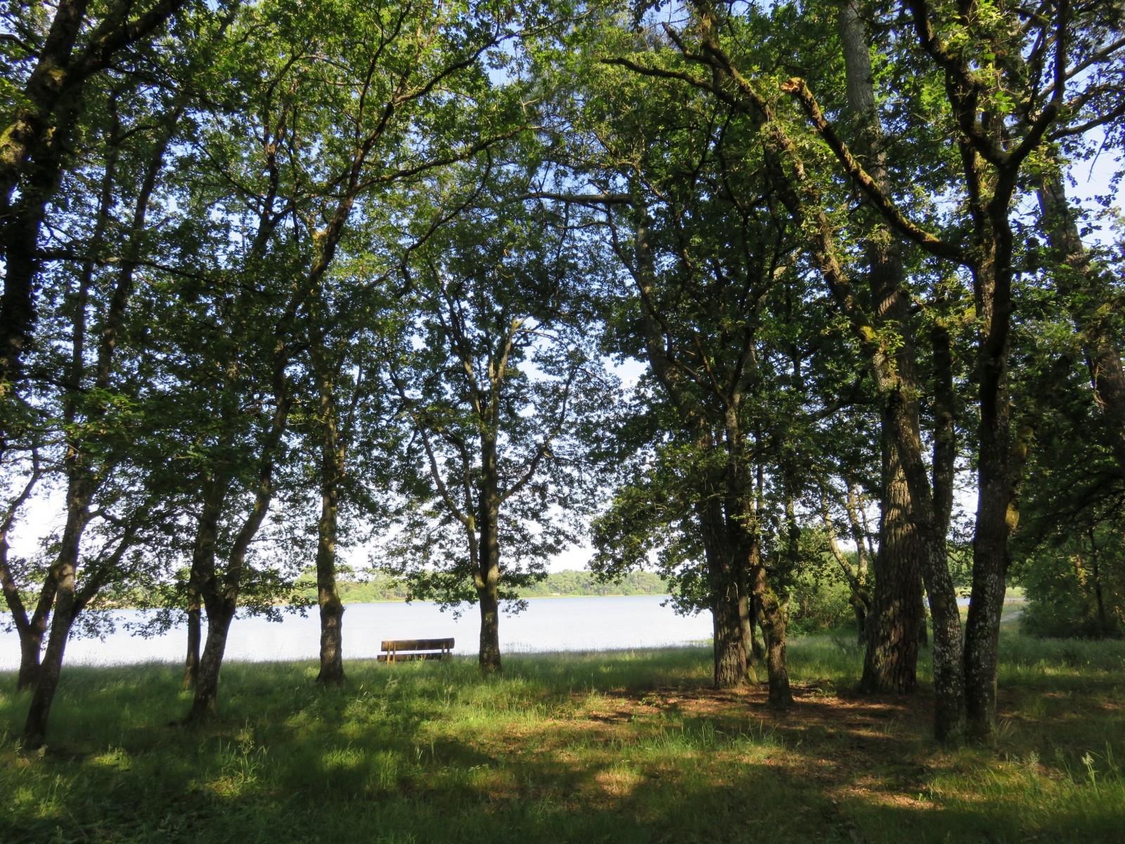 Photo  Vue de létang de Bellebouche depuis le sousbois ~ Bois De L Etang