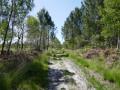 Du Lac Vert au Lac Bleu, entre pins et vignes dans les landes girondines