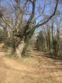 2- Le vieil arbre à laisser à gauche