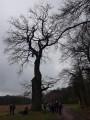 Gros Chêne Stetten