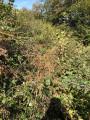 Prairies de Garrapit et Bénac sur les pentes de l'Araü