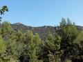 A flan de colline