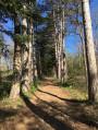 A l'entrée des bois