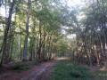 A l'ombre bienveillante de la forêt