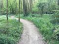 A travers bois le long de l'ilette