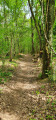 A travers bois
