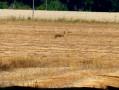 à travers champs