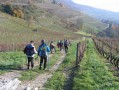 A travers le vignoble