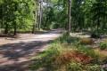 à travers les pins