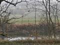 Le long du Doubs entre Boussieres et Abbans-Dessous