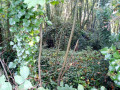 Abri dans la nature
