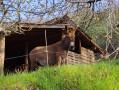 Abri pour les ânes
