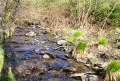 Le long de la Givonne et du Ruisseau des Fraichis