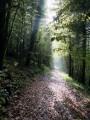 Alaise : Le retour par les bois