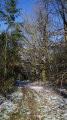 Allée d'arbre en forme de voute