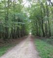 Boucles dans la Forêt Domaniale de Blois