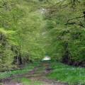 Sentier Botanique vert de Demigny