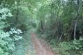 Allée forestière dans le Bois d'Enfiré