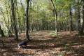Allée forestière dans le bois de Heidenbusch