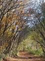 Allée forestière en automne