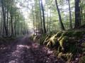 Ambiance mystérieuse en Forêt d'Orient