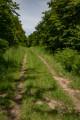 Le Chemin Européen de Saint-Colomban