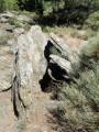 Les tombes mégalithiques de Combes