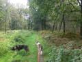 Dans les bois au Nord-Ouest de Baudour