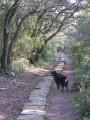 Promenade auprès de l'aqueduc de Castries et dans la garrigue