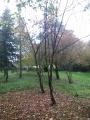 Arboretum des Viviers