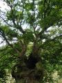 arbre creux