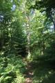 """Arbre """"isolé"""" dans la forêt"""