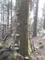 Arbre mort recouvert de champignons
