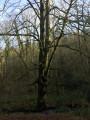 La forêt de Grimbosq au départ de Mutrécy