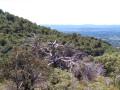 Arbre réservoir de biodiversité